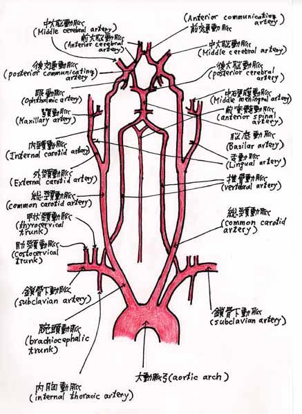 新編MeSH用語の体系的学習:心臓血管系